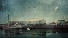 Vigilantes del puerto. (Marina Is) Tags: gulls gaviotas seaport poerto mar cielo sky sea boats barcos