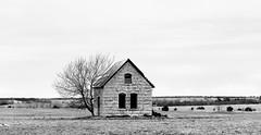 Morris County, Kansas (explore) (unknown quantity) Tags: horizon monochrome baretree corrugatedroof bleak abandonedhouse pasture boardedupwindows cloudy blackandwhite weathered sky