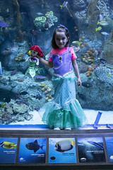Mermaids In The Water (evaxebra) Tags: long beach aquarium pacific aquariumofthepacific california dawn january 2019 luna mermaid ariel costume animal sea