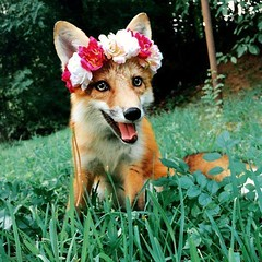 @everythingfox September 15 2018 at 09:01AM (hellfireassault) Tags: foxes everythingfox september 15 2018 0901am fantasticfoxes november 12 0936am