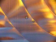 gold-silver ratio (minminatmidnight) Tags: wasserflasche flasche bottle waterbottle plastikflasche plasticbottle blasen bläschen bubbles drops droplets waterdrops water tropfen tröpfchen wasser wassertropfen liquid flüssig bunt farbe farben color colors colorful colour colours colourful abstract abstrakt fujifilmfinepixs100fs makro macro gold silver silber