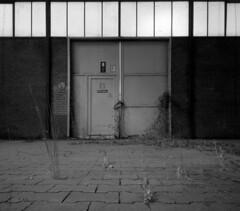 C 17 (andi_heuser) Tags: urbanexploration lostplaces gebäude building fabrik factory architektur architecture verlassen abandoned alt old zerstört destroyed film analog analogue schwarzweiss blackwhite schwarzweissfilm ilford ilforddelta3200 6x7 120 andiheuser