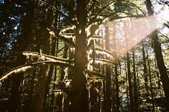 Moss (hyekab25) Tags: pentaxk1000 film filmcamera colorfilm 35mm 35mmcolourfilm 35mmcolorfilm