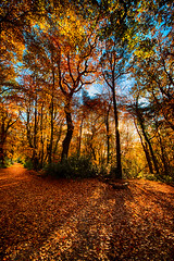 """up around the corner and on into the light, a sun-soaked autumn path in Bois de Breuil, near Honfleur, Calvados, Normandie, France (grumpybaldprof) Tags: """"fineart"""" ethereal striking artistic interpretation impressionist stylistic style contrast shadow bright dark black white illuminated colour colours colourful """"wideangle"""" ultrawide canon 7d """"canon7d"""" sigma 1020 1020mm f456 """"sigma1020mmf456dchsm"""" """"boisdubreuil"""" """"forestofbreuil"""" honfleur vasouy penndepie conservation """"conservatoiredulittoral"""" rhododendrons """"coastalconservancy"""" bois forest trees deciduous coniferous wood woods coastline """"dukesofnormandy"""" french kings """"philippeauguste"""" breuil wildlife wildboar """"pinemarten"""" """"redfox"""" deer """"forestwalk"""" landscape branches leaves shapes patterns normandy calvados france path corner light autumncolours"""