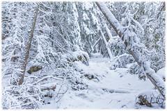 into the winter forest ... (D J England) Tags: djenglandphotography sigma24105mmf4dgoshsma davistrail douglasjengland simpsonave trails haybay ontario dje canoneos5dmkiii southernontario djengland thebruce tobermory brucepeninsula