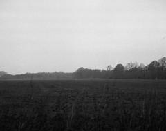 Great white heron (Rosenthal Photography) Tags: 6x7 ff120 landschaft epsonv800 winter mittelformat städte ilfordlc2911921°c145min 20181203 schwarzweiss ilfordrapidfixer anderlingen asa3200 mamiya7 ilforddelta3200 dörfer siedlungen greatwhiteheron whiteheron landscape december fog mist morning fields trees mamiya 150mm f45 ilford delta delta3200 lc29 119 epson v800