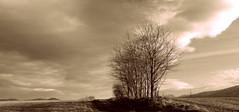 Wiosenny widok. (andrzejskałuba) Tags: poland polska pieszyce dolnyśląsk silesia sudety europe panasonicdmcfz200 lumix plant roślina drzewa tree trees trawa grass pole field view white widok beautiful biały sepia clouds chmury góry górysowie mountainsofowls natura nature natural natureshot natureworld sky niebo 1000v40f 1500v60f