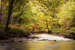 Golden October (Christian Hacker) Tags: riverteign finglebridge nationaltrust autumn colourful longexposure autumnal leaves river stream flowing woodland forest nature outdoors walk canoneos50d tamron1750mm cokinfilter nd8 trees landscape devon dartmoornationalpark inexplore explored explore