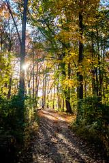 Sunset at Rock Creek (ep_jhu) Tags: autumn flare washington sunset nature rockcreekregionalpark sol dc fujifilm light sun fuji naturaleza luz x100f trees fall districtofcolumbia unitedstates us provia