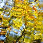 Golden Fall Abstraction thumbnail