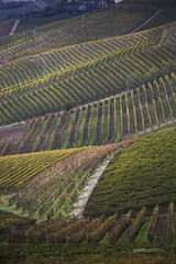 ROERO&LANGHE_225_1118@ANDREAFEDERICIPHOTO (Andrea Federici) Tags: countryside europe travel vineyard vineyards agriculture autumn autumnal country grapes hill hills italia italian landscape langhe northern piedmont piemonte rural season tourism view vine wine winery