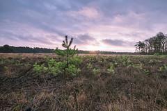 Colourfull tiny trees (Dannis van der Heiden) Tags: trees sunrise nature dentreek henschoten grass leusden amersfoort nikond750 d750 tokina1628mmf28 landscape netherlands morning dawn backlight wood clouds sunshine sun