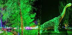 brontosaurus green (JoelDeluxe) Tags: rol riveroflights abq biopark nm december 2018 albuquerque biological park pnm light display colors lights sculptures fantasy newmexico hdr joeldeluxe