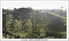 Sri Lanka - Damro Labookellie Tea Center (afer92 (busy)) Tags: damro img1703 srilanka culture plantation production thé ramboda nuwaraeliya lk tea
