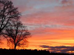 ....Himmel überm Wald.... (elisabeth.mcghee) Tags: abendrot abendhimmel abendsonne sunset sonnenuntergang himmel sky wolken clouds unterbibrach bäume trees wald forest oberpfalz upper palatinate