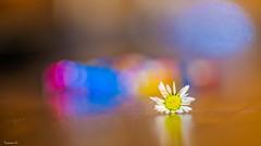 Flower - 6402 (ΨᗩSᗰIᘉᗴ HᗴᘉS +38 000 000 thx) Tags: macro fuji fujifilmgfx50s fujifilm trioplan meyer flower flora belgium europa aaa namuroise look photo friends be wow yasminehens interest eu fr greatphotographers lanamuroise flickering