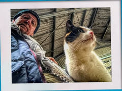 Cat at the stable (gill4kleuren - 18 ml views) Tags: pussy puss poes chat mieze katje gato gata gatto cat pet animal kitty kat pussycat poezen mouse moments hair eyes little jong young katze minou gatta kater photo weer weather day