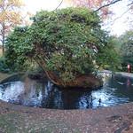 Grove Park, Harborne - pond thumbnail