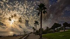 Iluminando el paseo (Fotgrafo-robby25) Tags: alicante amanecer costablanca marmediterráneo nubes palmeras sonyilce7rm3 torredelahoradada árbolesyarbustos