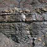 Limestone (Mill Knob Member, Slade Formation, Upper Mississippian; Clack Mountain Road Outcrop, south of Morehead, Kentucky, USA) 5 thumbnail