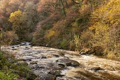 Watersmeet (chairman.bill) Tags: exmoor devon watersmeet autumn fall