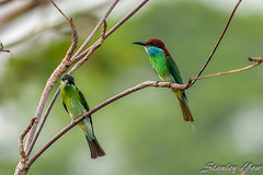D850-6201 (yowstanley) Tags: nikon nature wild bird d750 200500mm garden