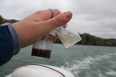 Sample clarity from different mesh sizes (MarBio Abbie) Tags: plastic microplastic trawl marine biology marinebiology stem science boat sea estuary plankton fieldwork pollution beachcleanproject