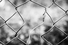 Gartenzaun (AxelN) Tags: bokeh hole zaun mesh sw loch bokehlicious inpieces gap schwarzweis bw kaputt wiremeshfence broken blackandwhite lücke fence
