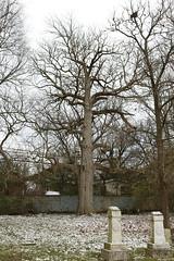 Bickett-Richard Cemetery (dankeck) Tags: grave gravestone gravemarker headstone tree branches upperarlington graveyard cemetery smallcemetery smallgraveyeard familycemetery familygraveyard centralohio franklincounty suburb suburban