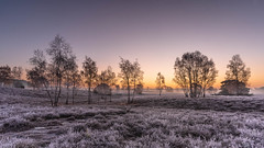 Morning Glow II (michel1276) Tags: morning sunrise fog landscape cold frost westruperheide halternamsee nrw germany deutschland landschaft sonnenaufgang heide trees bäume tree