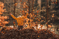 Joy (Elizabeth Sallee Bauer) Tags: nature active autumn backyard beautyinnature boy child childhood fall fun girl happiness jumping kid leaf leafpile leaves november outdoors outside playing portrait raking trees youth