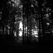 Out of the dark forest