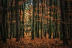 By the end of November, autumn had changed its face (Claudia G. Kukulka) Tags: forest wald trees bäume autumn fall herbst november leaves foliage laub blätter