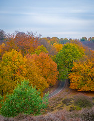 The red road (Michiel Pols) Tags: panasonic g80 g85 veluwe posbank autumn herfst forest trees tree colors color red yellow trail hike lumix g vario 1260 road
