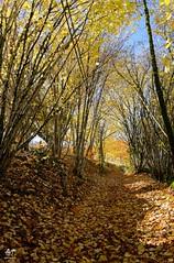 Chemin de feuilles (Vosges, France)