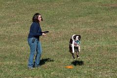 SZP_1332_pslr5 (Lakeside Annie) Tags: 11102018 2018 20181110 24120mm 24120mmf40 70300mm 70300mmf4556 d750 fall huntersville huntersvillenc leannefzaras nc nikkor nikkor24120mmf40 nikkor70300mmf4556 nikkorlens nikon nikond750 northcarolina november10 ruralhill sarazphotography saturday sheepdog sheepherdingtrials dog dogfestival frisbee frisbeedog shepherd trick trickdog