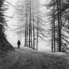 Chamois (Fabio Corò - PARMA) Tags: hasselblad 500cm planar zeiss 80mm ilford fp4 pellicola film medio formato 6x6 inverno winter snow valle daosta fabiocorò boschi trekking