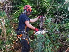 trimming the trees - explored (quietpurplehaze07) Tags: smileonsaturday busyhands dave treesurgeon trees silver birch chainsaw explored