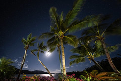 sitting in the moonlight... (Rafael Zenon Wagner) Tags: nacht sterne palmen dschungel strand australien nikon d810 laowa12mmf28zerod 12mm langzeitbelichtung longexposure night stars palm trees jungle seashore australia moon light reflection coralsea korallenmeer