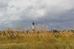 Reeds and clouds (Irina1010) Tags: reeds grasses lighthouse beach seashore clouds storm wind moody nature savannah tybeeisland 2018 october