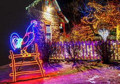 crowing to the light (JoelDeluxe) Tags: rol riveroflights abq biopark nm december 2018 albuquerque biological park pnm light display colors lights sculptures fantasy newmexico hdr joeldeluxe
