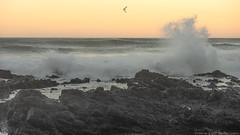 x1_809101276 (captured by bond) Tags: oregon ocean oceanscape pacificocean northwest water