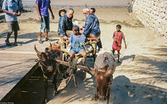 Madagascar (Olympus XA) -000032 (limpinglemur) Tags: explorelostcontinenttrip filmscan madagascar october2018 olympusxa zuiko35mmf28 kodakektar100film