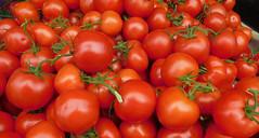 Tomatoes (earthdog) Tags: 2017 food edible tomato market shopping farmersmarket mountainview nikon coolpix s7000 nikoncoolpixs7000 fruit