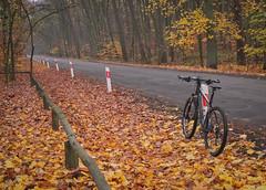 Late autumn ride in Wielkopolski National Park (dominikpl72) Tags: poland polen polska wielkopolska autumn bicycle cycling fuji fujifilm x10