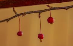 """Nature is an artist"" - Smile on Saturday (Karon Elliott Edleson) Tags: berries fall branch art nature natureisanartist smileonsaturday macro closeup hanging"