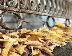 Automne (Jolivillage) Tags: jolivillage automne autumn autunno fogli feuilles leaves