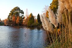 Sheffield Park and Garden, East Sussex. (Adam Swaine) Tags: sheffieldpark nature nationaltrust lakes trees autumn autumncolours autumnviews beautiful water waterside england english britain british tree uk ukcounties counties county sussex sussexlandscape sussexgardens canon