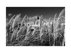Palma (Dirk Steglich pesce4221) Tags: españa spain spanien mallorca palma catedral kathedrale 19mm x100s sw bw bn