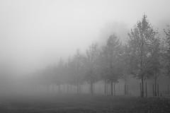 Kaivopuisto - Brunnsparken (Markus Heinonen Photography) Tags: kaivopuisto brunnsparken puisto park helsinki stadi helsingfors sumu fog dimma mist puu tree kuja alley suomi finland europe maisema landscape scenery luonto nature